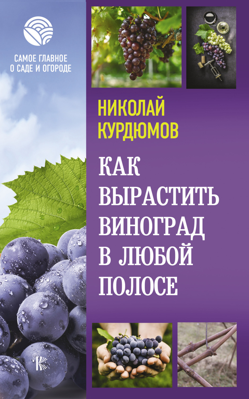 Как вырастить виноград в любой полосеТекст